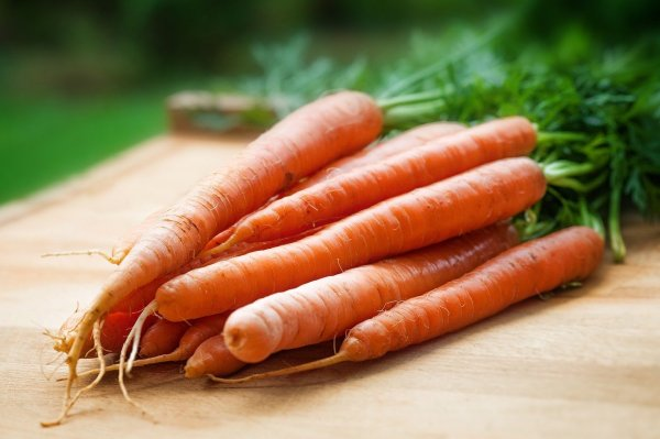 grow carrots from carrot tops