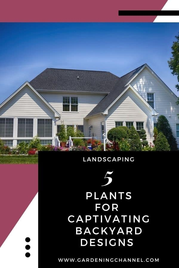 backyard landscaped with text overlay landscaping five plants for captivating backyard designs