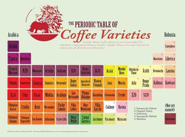 Coffee varieties periodic table