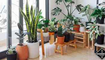 How To Grow Your Own Coffee Plant At Home