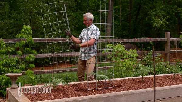 Make sturdy tomato cage