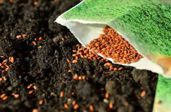 our top picks for organic seed companies