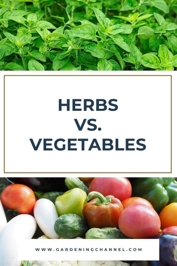 oregano and vegetable harvest with text overlay herbs versus vegetables