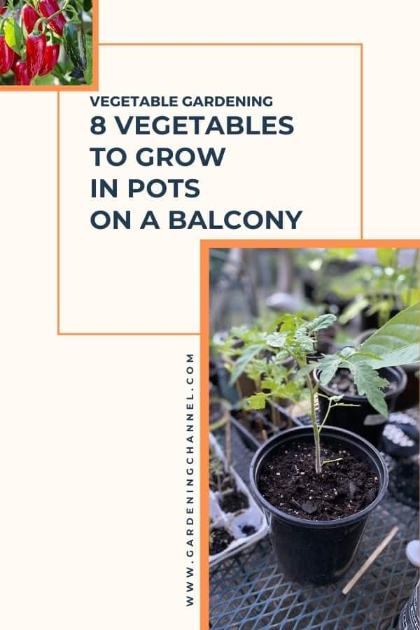jalapeno peppers and container pepper plants with text overlay vegetable gardening eight vegetables to grow in pots on a balcony