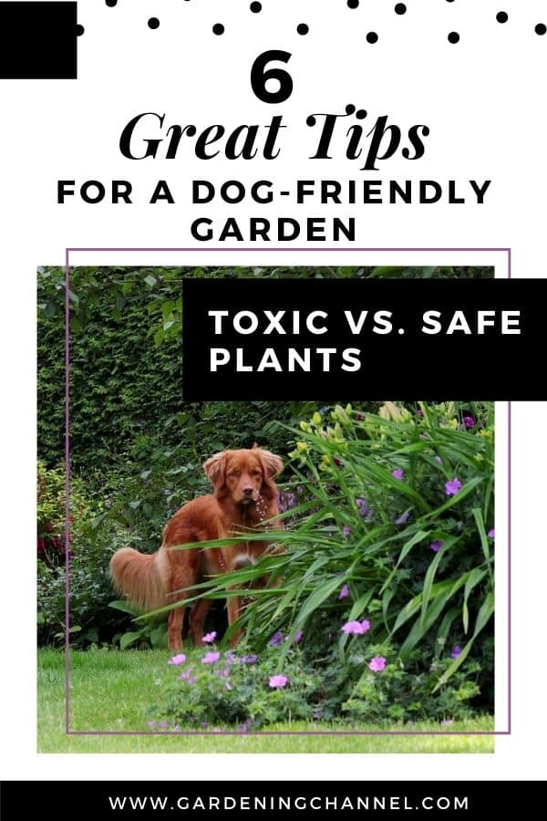 retriever dog in yard with text overlay six great tips for a dog-friendly garden toxic versus safe plants
