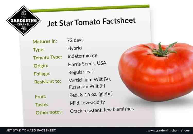 Jet star tomato factsheet