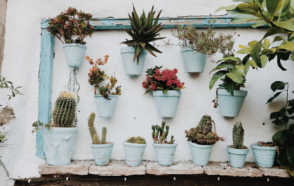 plants-in-pot-on-wall