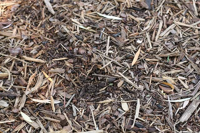 shredded bark organic mulch