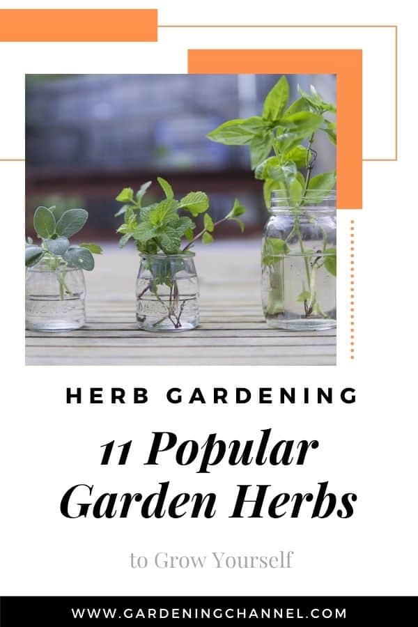 harvest herbs with text overlay herb gardening eleven popular garden herbs to grow yourself