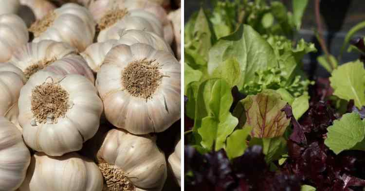 vegetables that grow in shallow containers like garlic and greens