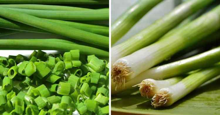 difference between chives and green onion