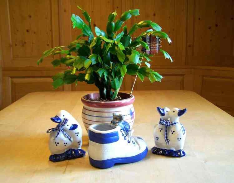 christmas cactus in a pot