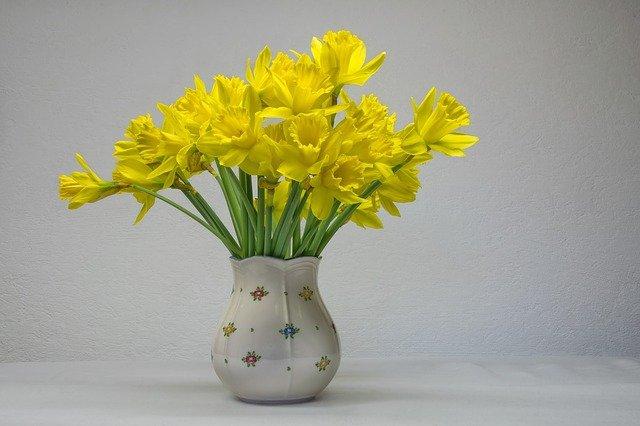 growing daffodils
