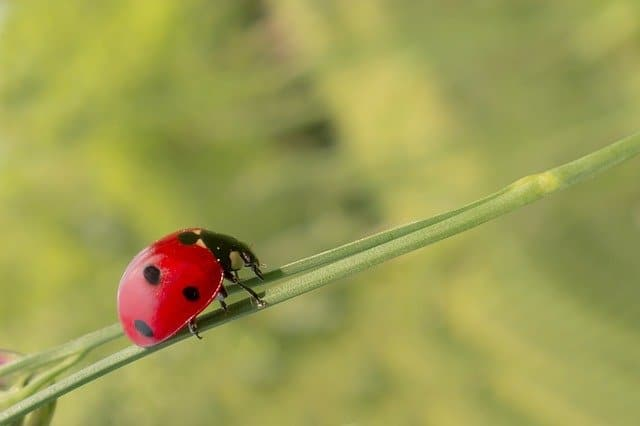 attract beneficial insects