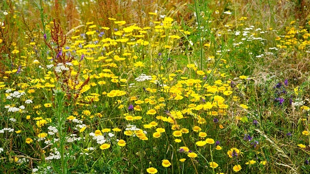 wildflowers and regional grasses