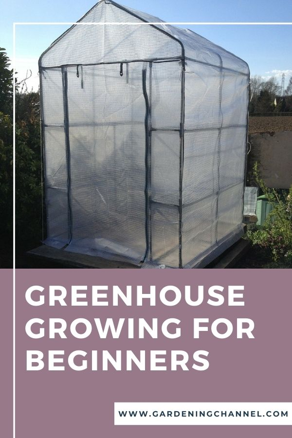 greenhouse in garden with text overlay greenhouse growing for beginners