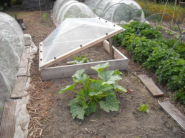 growing vegetable in greenhouse