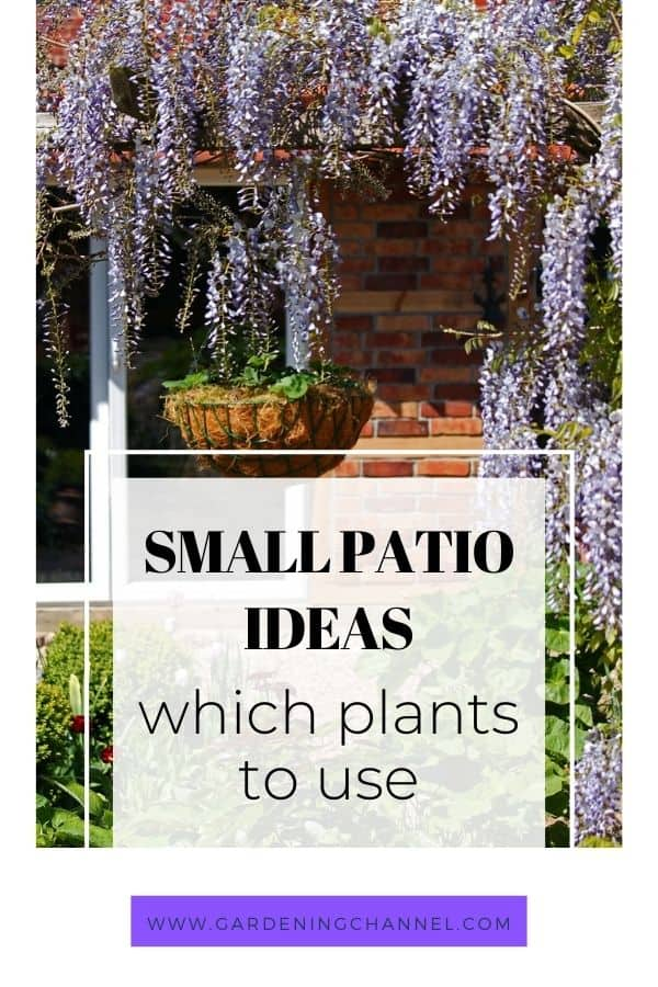 backyard patio with text overlay small patio ideas which plants to use