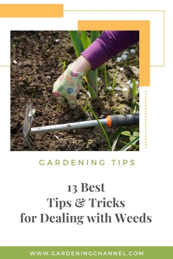 weeding the garden with text overlay 13 Best Tips and Tricks for Dealing with Weeds