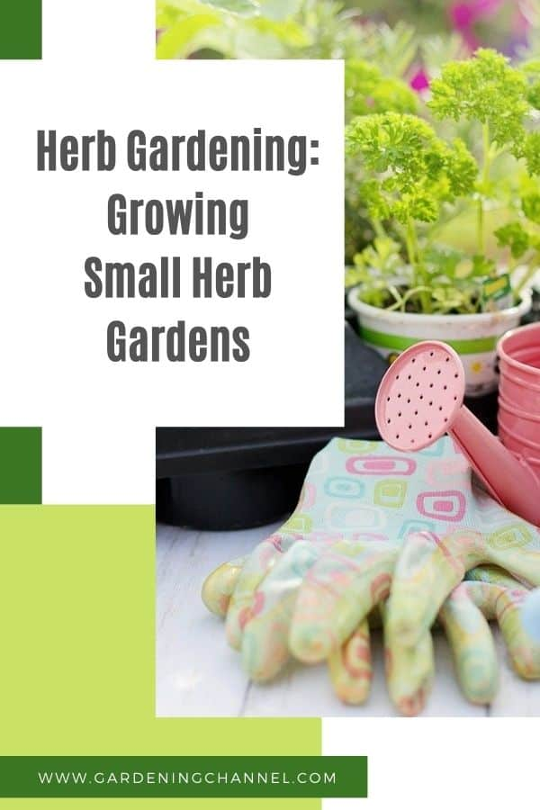 planting herb garden with text overlay herb gardening growing small herb gardens