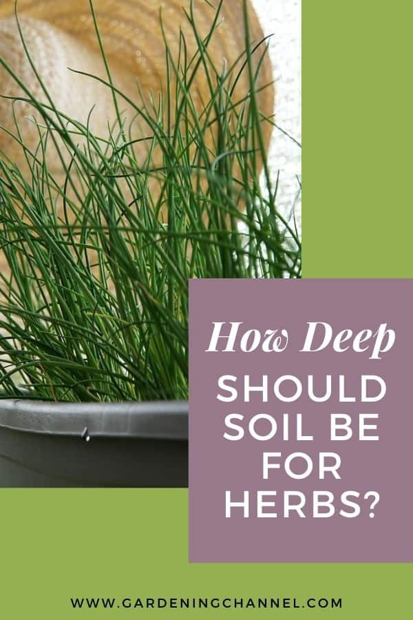 chives in pot with text overlay how deep should soil be for herbs