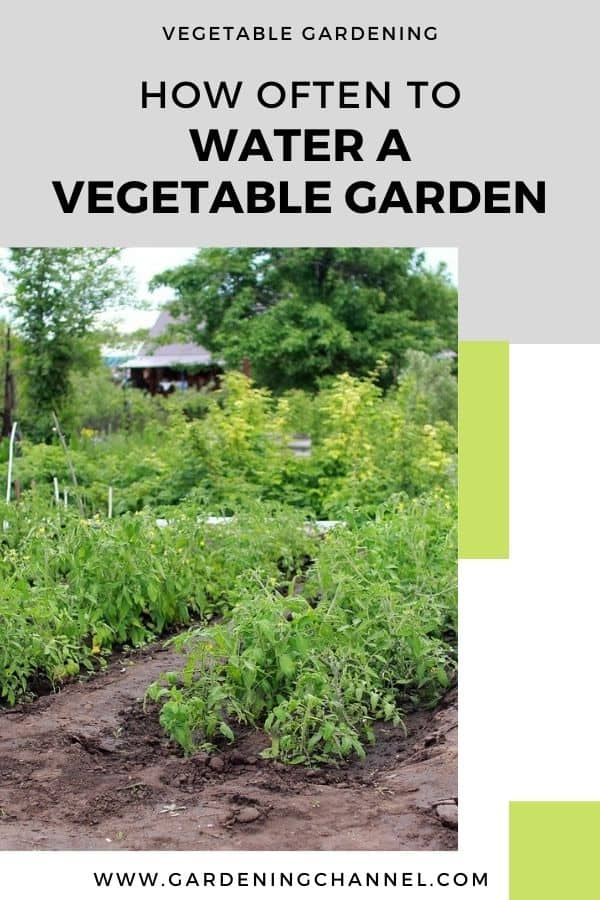 vegetable garden with text overlay vegetable gardening how often to water a vegetable garden