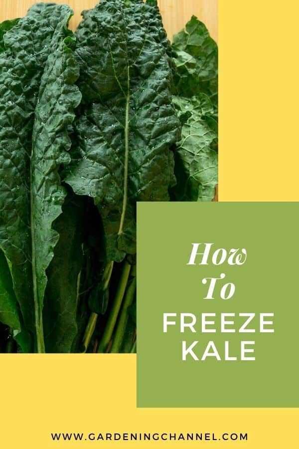 harvested kale with text overlay how to freeze kale