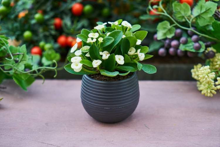houseplant in a pot