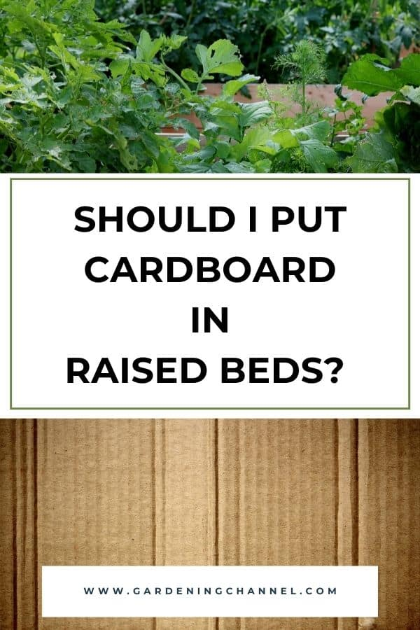raised garden bed and cardboard with text overlay should i put cardboard in raised beds