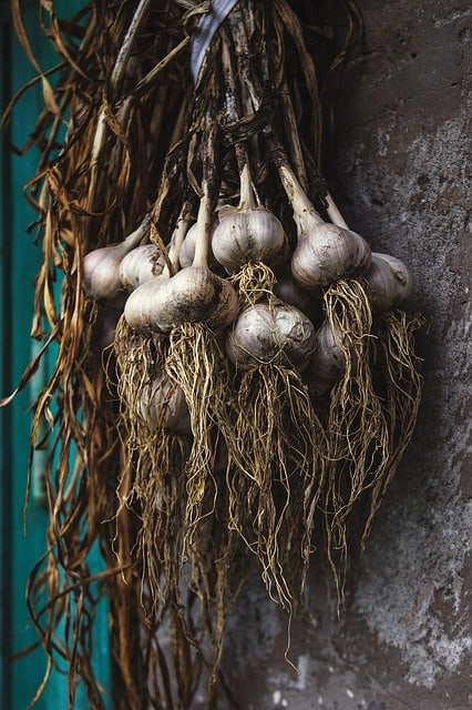 curing garlic from garden