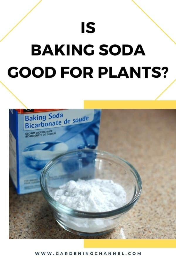 baking soda with text overlay is baking soda good for plants