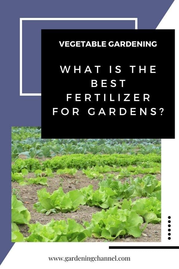 salad garden with text overlay vegetable gardening What is the best fertilizer for gardens?