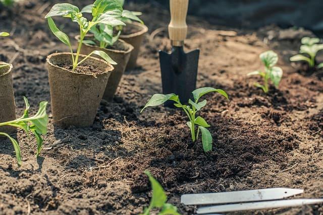 planting a garden when to fertilize