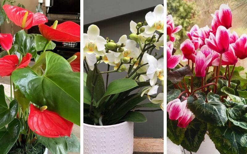 12 Low Light Flowering Indoor Plants To Brighten Your Home Gardening Chores