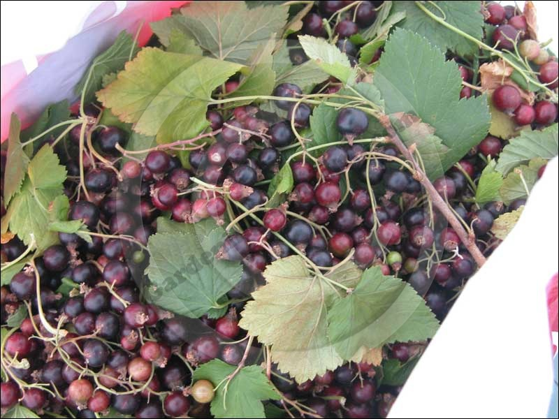 The RHS are warning that fruit yields could be reduced this year