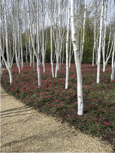 Part of the Winter Gardens at Anglesey Abbey