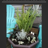 Plant Your Own Dramatic Patio Planter!