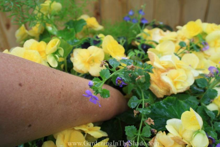 Hand in middle of planter