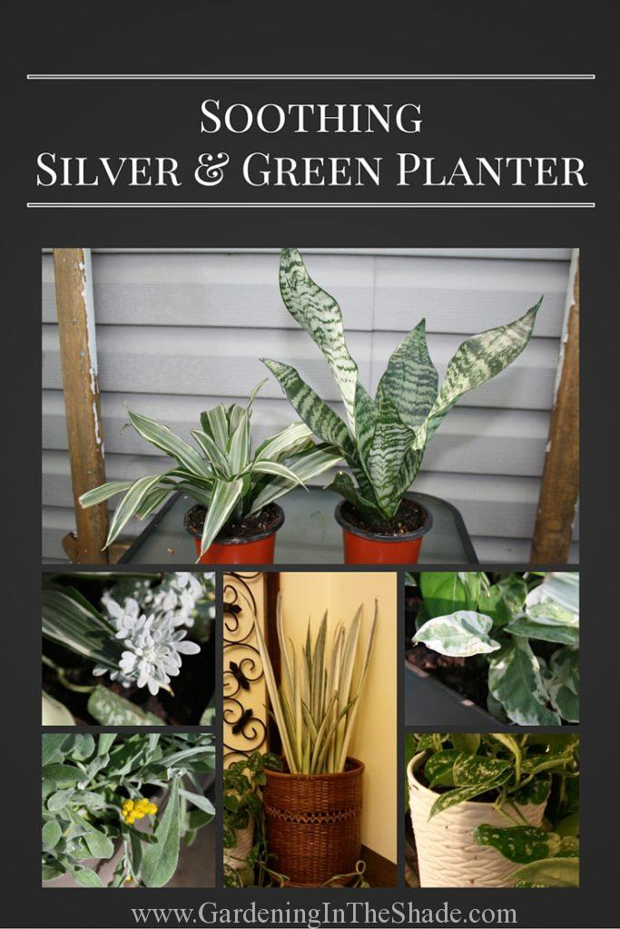 Silver and Green Plants