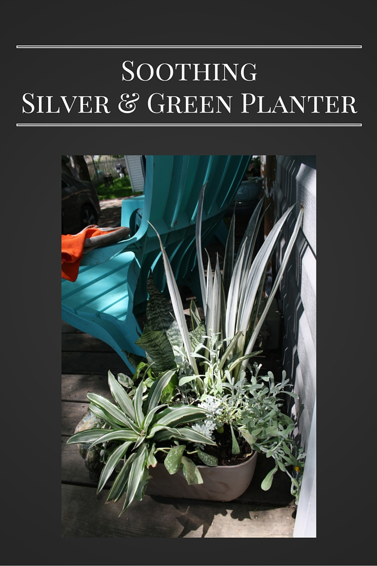 Soothing Silver Green Planter