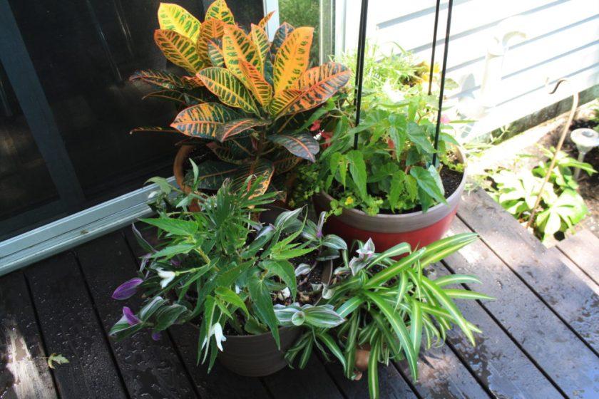 Planter Grouping