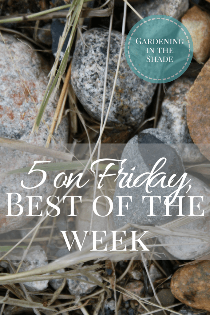 5 on Friday best of the week
