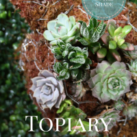 Topiary Mini Turtle - Tutorial