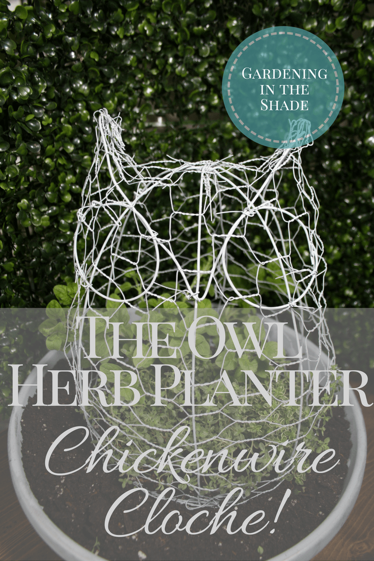 The Owl Herb Planter