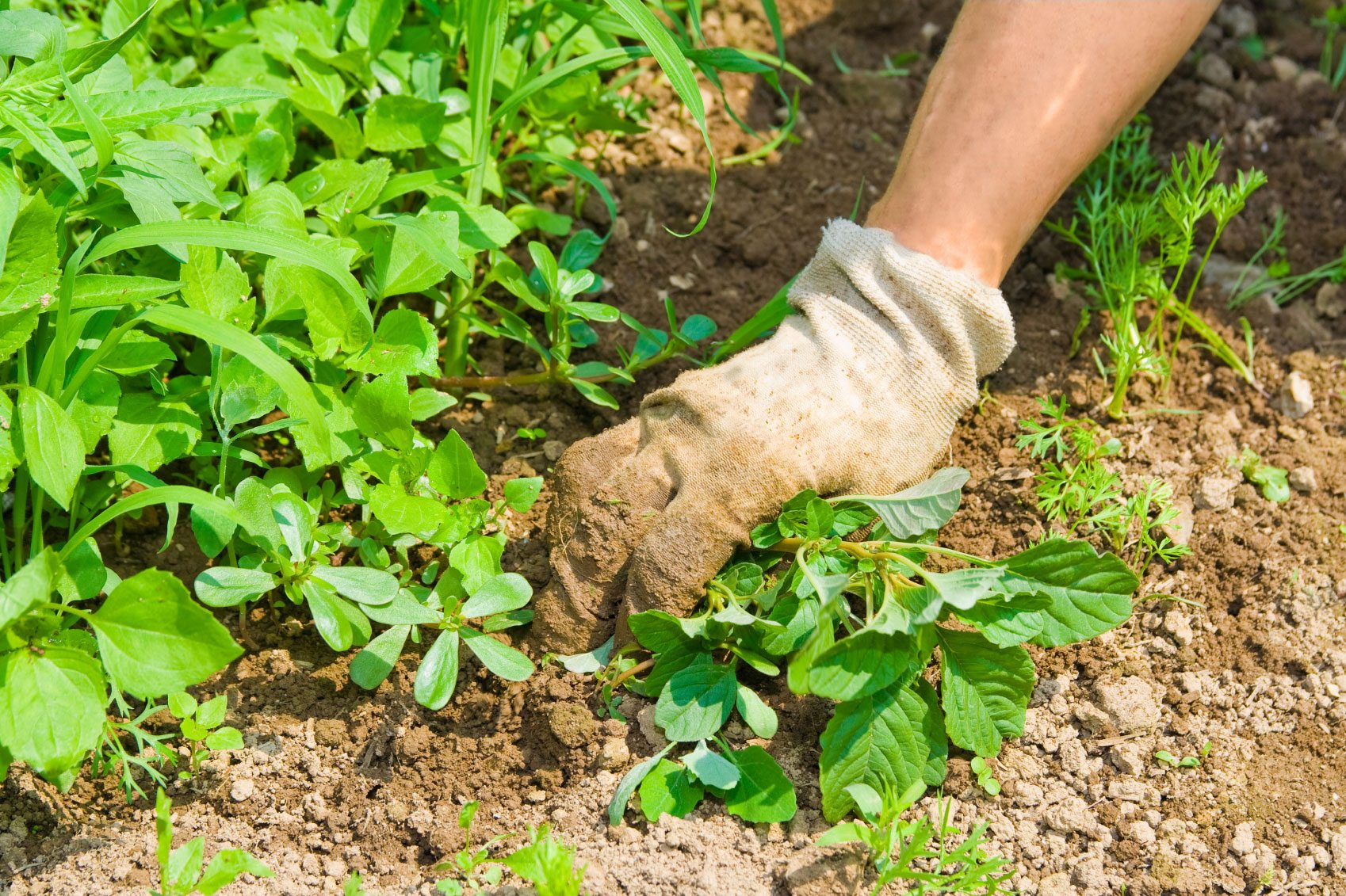 Vegetable Weed Control How To Keep Weeds Out Of A Vegetable Garden