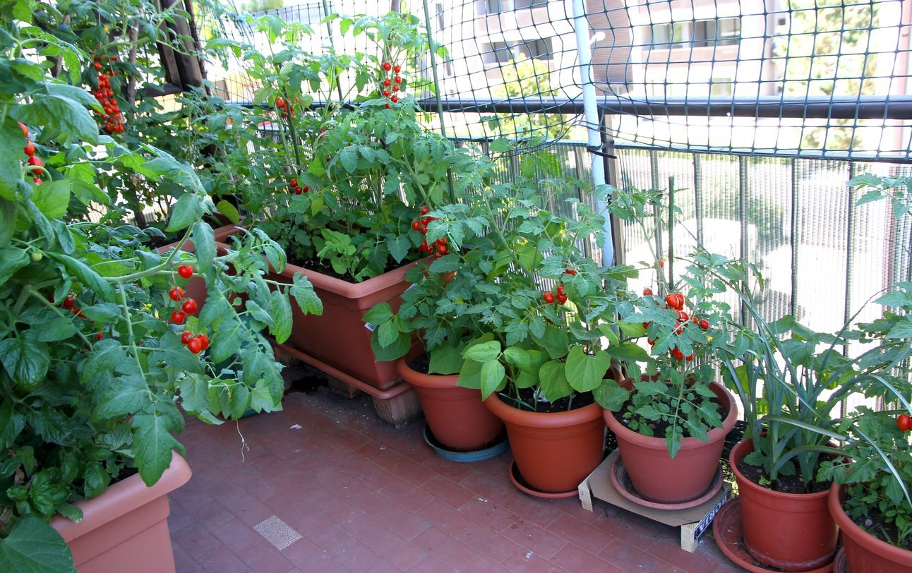 Apartment Gardening Ideas: Container Gardens For Apartment ...