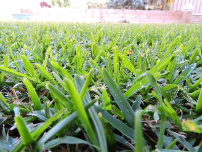 Drought Tolerant Grass Varieties What Are Some Types Of Drought