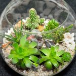 Succulent Terrarium Instructions Learn About Growing Succulent Plants In Terrariums
