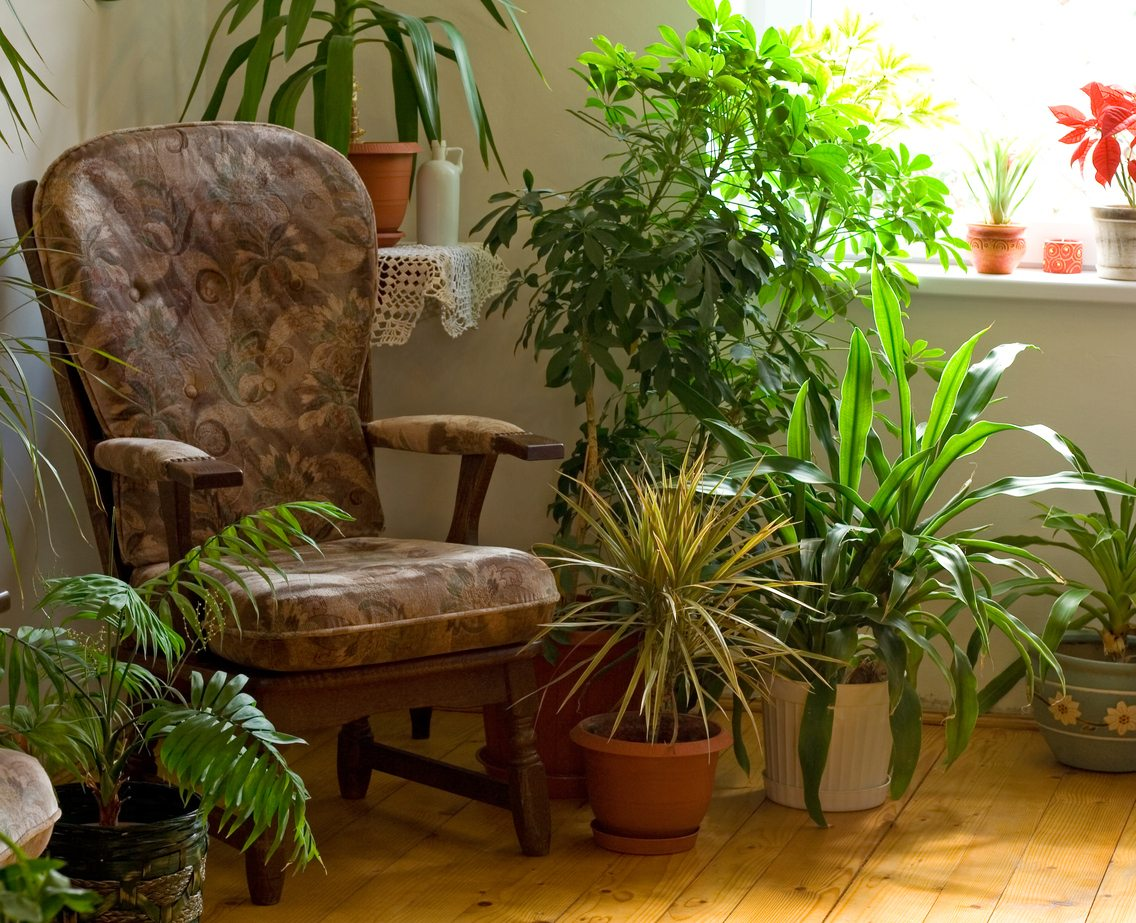 Living Room Houseplants - Tips On Growing Plants In The Living Room