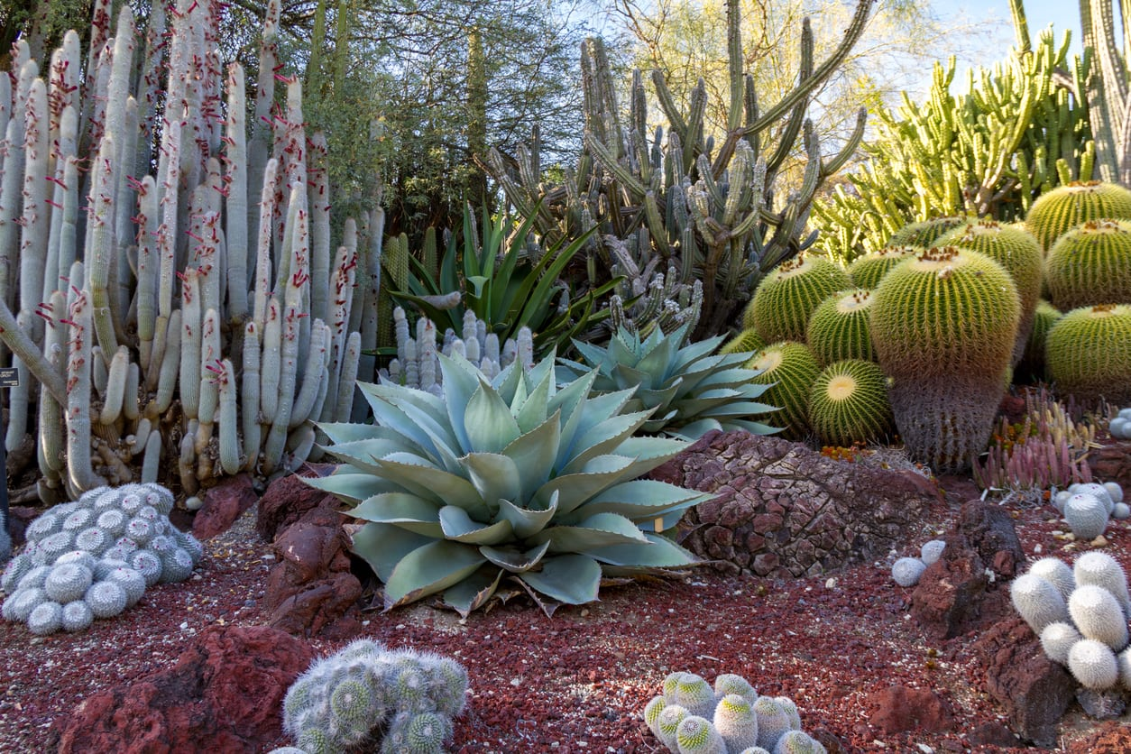 Desert Garden Ideas Tips For Southwest Landscaping And Outdoor